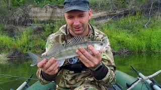 Ловля СУДАКА осенью На что ловить судака осенью Рыбалка осенью на красивой речке