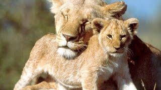 Животные африканского континента. Документальный фильм. Серия 1.