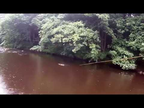 The River Esk (20/7/2015) Losing A Fish On The 47 Fly