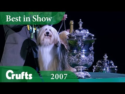 Tibetan Terrier wins Crufts Best In Show 2007 | Crufts Classics