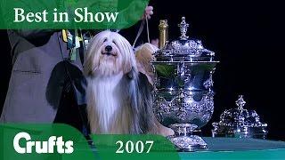 Tibetan Terrier wins Crufts Best In Show 2007   Crufts Classics