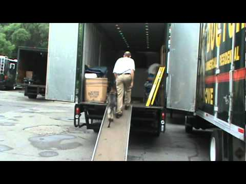 moving-company-moving-doctor-bed-bug-free-2