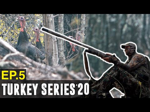 GOBBLERS IN RANGE – Tennessee Public Land Turkey Hunting
