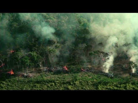 'Le poumon de la planète est en feu' – BBC Info