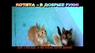 Очаровательные котята - в добрые руки!
