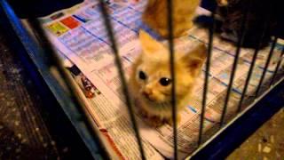 Спасение кошек из квартиры сумасшедшей