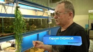 Как выбрать аквариум?(, 2014-12-11T07:58:28.000Z)