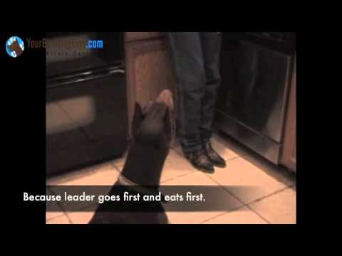 Becoming Pack Leader -