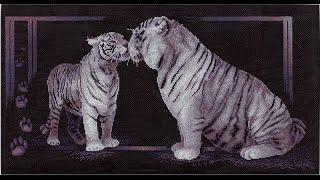 """Тигриная любовь Панна СП """"В мире животных"""" отчет за март"""