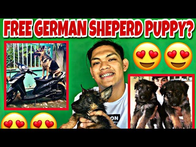 FREE GERMAN SHEPERD PUPPY?