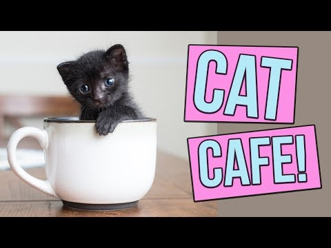Buster - Cat Cafe Coming To Tampa