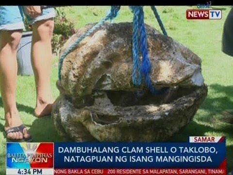 BP: Dambuhalang Clam Shell o Taklobo, natagpuan ng isang mangingisda sa Samar
