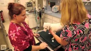 Southside Veterinary Hospital | Vero Beach, FL| Grooming