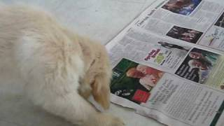 Puppy Paper Training