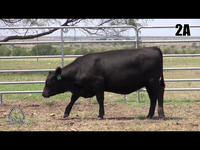 Pearcy Angus Ranch Lot 2A