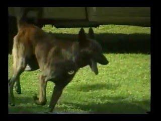 Cop Dogs Pt. 1