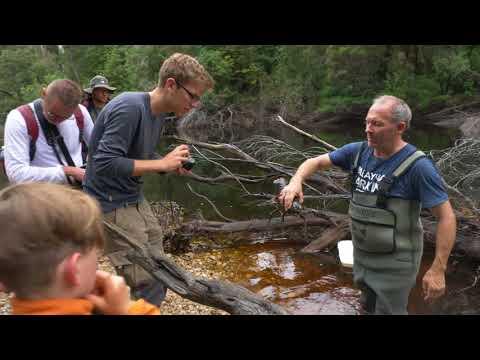 Tarkine BioBlitz: Freshwater Crayfish Survey With Todd Walsh