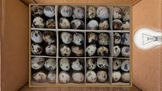 DIY-MAKE HATCHING Egg Incubator cheap and easy at home   MHMB  