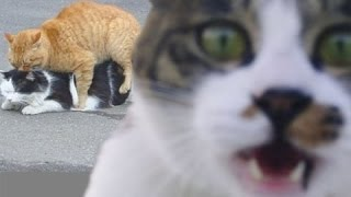 Ругательство котов!!!!