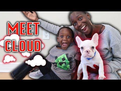 "Meet Our New Puppy ""Cloud"""