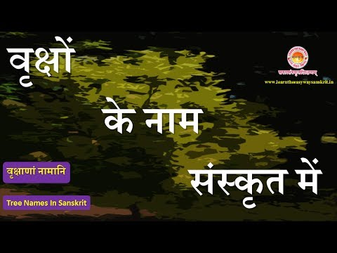 essay on pine tree in hindi