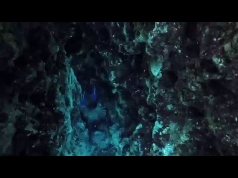 Ginnie Springs Camping & Diving 2015