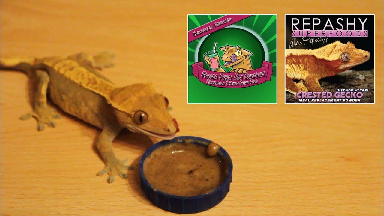 pangea food  Mixing Repashy & Pangea | CRESTED GECKO DIET - YouTube