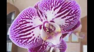 Бисероплетение. Урок № 2. Технология изготовления розовой орхидеи из бисера своими руками.