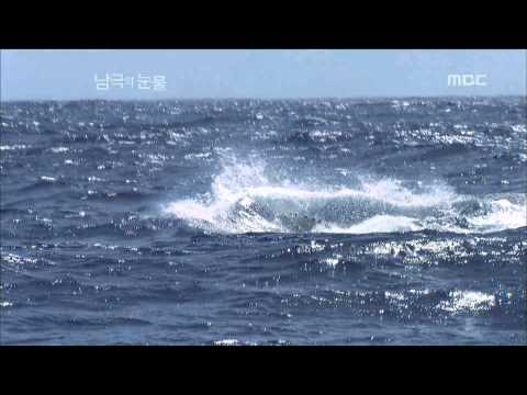 Secret of the Antarctic marine ecosystem - Tears of the Antarctic EP01, #05, 남극 해양생태계