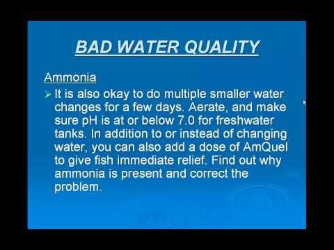 Fish Tank Water Problems