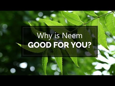 Why Is Neem Good For You | Health And Wellness