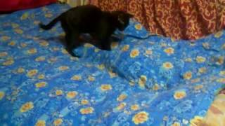 Что найдет котенок под одеялом?