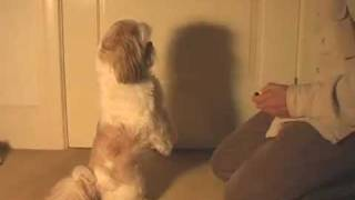 "Dog Training Tricks - ""beg"""