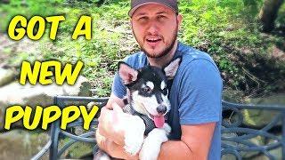 I Got A New Puppy