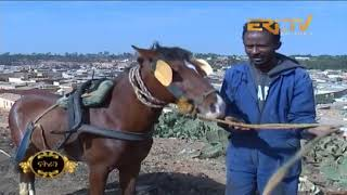 ERi-TV መደብ ፍኖተ ሂወት: Day Laborers And Their Horses
