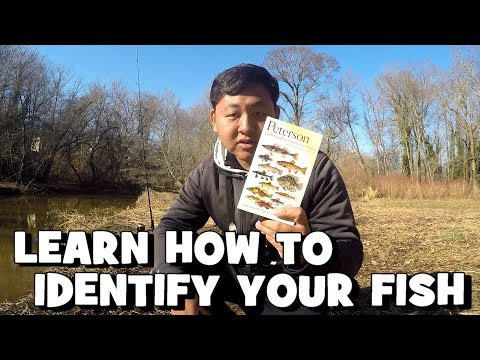 Fish Identification Is A Crucial Skill For Every Angler! Ft. FirstStateFishing (Give-Away Included)