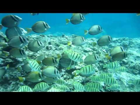 Aquarium Fish Population Hawaii