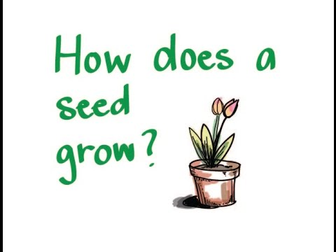 How Does A Seed Grow