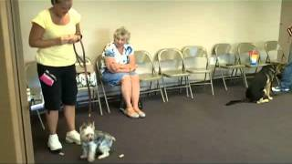 Elementary Obedience Class 2 - Leave It!- At Bark-a-bout With Gwen