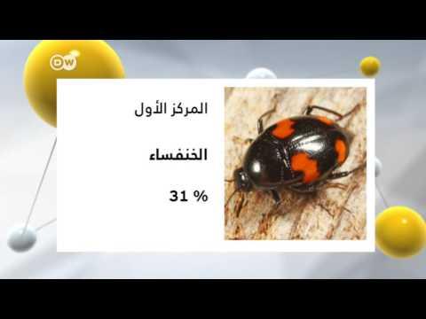 الترتيب العالمي للحشرات التي تُؤكل