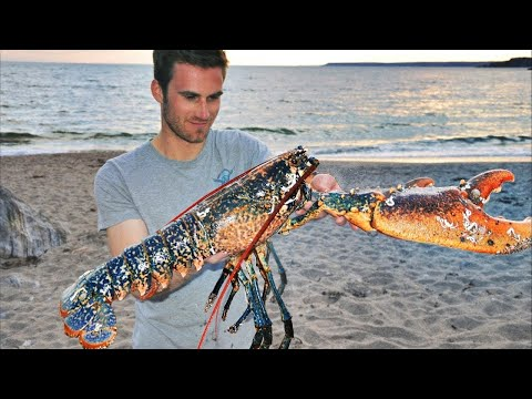 Catching GIANT LOBSTERS By Hand And Wild Beach Cooking!