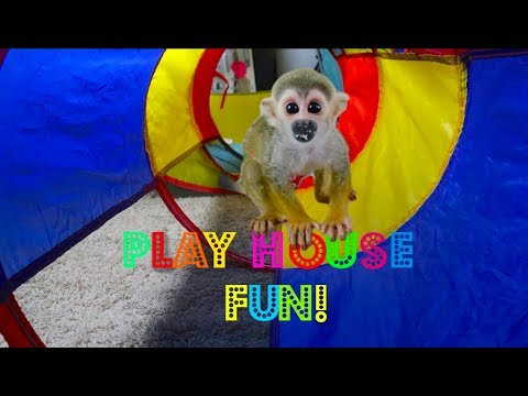 Baby Monkey oLLie MonkeyBoo Playhouse Fun! (FUNNY)