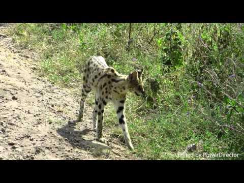 Kenya and Tanzania safari 2015