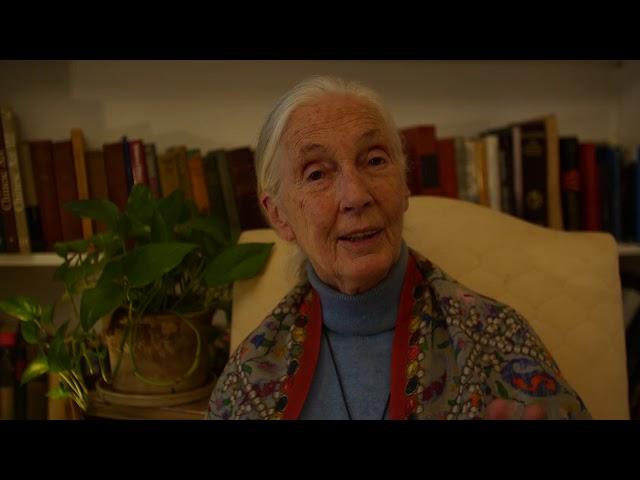 Jane Goodall sobre el Cambio Climático