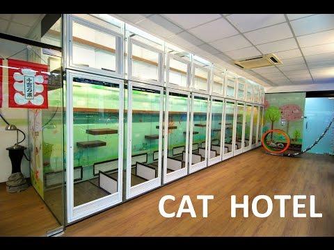88 PETS MART [CAT HOTEL] Brand new concept (Petaling Jaya, Malaysia)