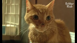 Cat With Depression Refuses To Eat (Part 1)   Animal In Crisis EP37