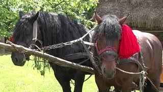 Caii Unirii - Zilele Maramuresului 2019