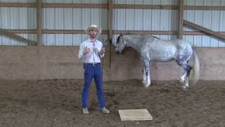 Teaching Your Horse to Work at Liberty Series | Mark Training #1