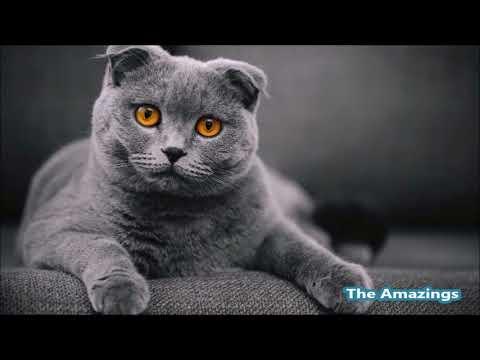 Top 10 of beautiful cat breeds