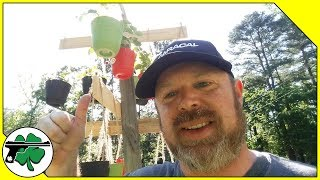 How To Grow Strawberries In Hanging Baskets - The Strawberry Tree